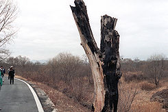 245px-DMZ_incident_tree