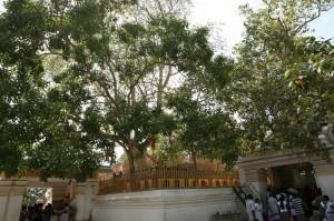 Anuradhapura Sri Lanka (61)