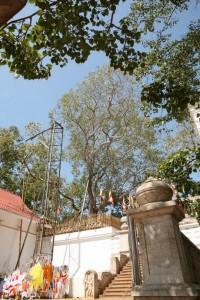 Anuradhapura Sri Lanka (91)