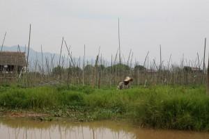 Birma - Inle Lake (387)