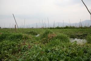 Birma - Inle Lake (412)