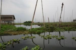 Birma - Inle Lake (422)
