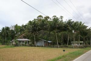 Bohol Filipiny (171)