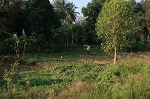 Hikkaduwa - Sri Lanka (15)