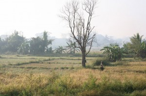 Hikkaduwa - Sri Lanka (3)