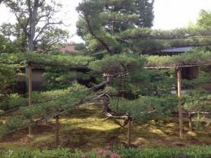 japonia-261