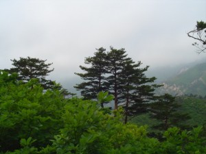 Korea Północna (33)
