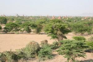 Pagan - Bagan - Birma (18)