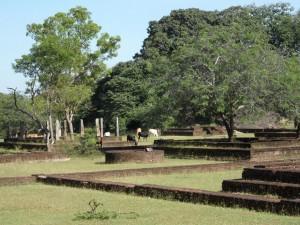 Polonnaruwa - Sri Lanka (59)