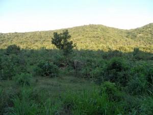 Polonnaruwa - Sri Lanka (63)