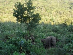 Polonnaruwa - Sri Lanka (64)