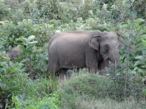 Polonnaruwa - Sri Lanka (66)