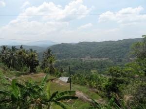 Sri Lanka (36)