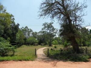 Sri Lanka Anuradhapura (116)