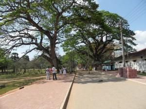 Sri Lanka Anuradhapura (38)