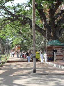 Sri Lanka Anuradhapura (39)