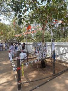 Sri Lanka Anuradhapura (46)