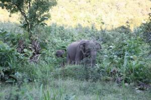 Sri Lanka - Polonnaruwa (114)