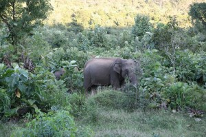 Sri Lanka - Polonnaruwa (115)