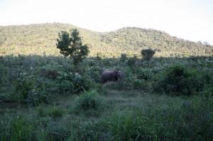 Sri Lanka - Polonnaruwa (116)